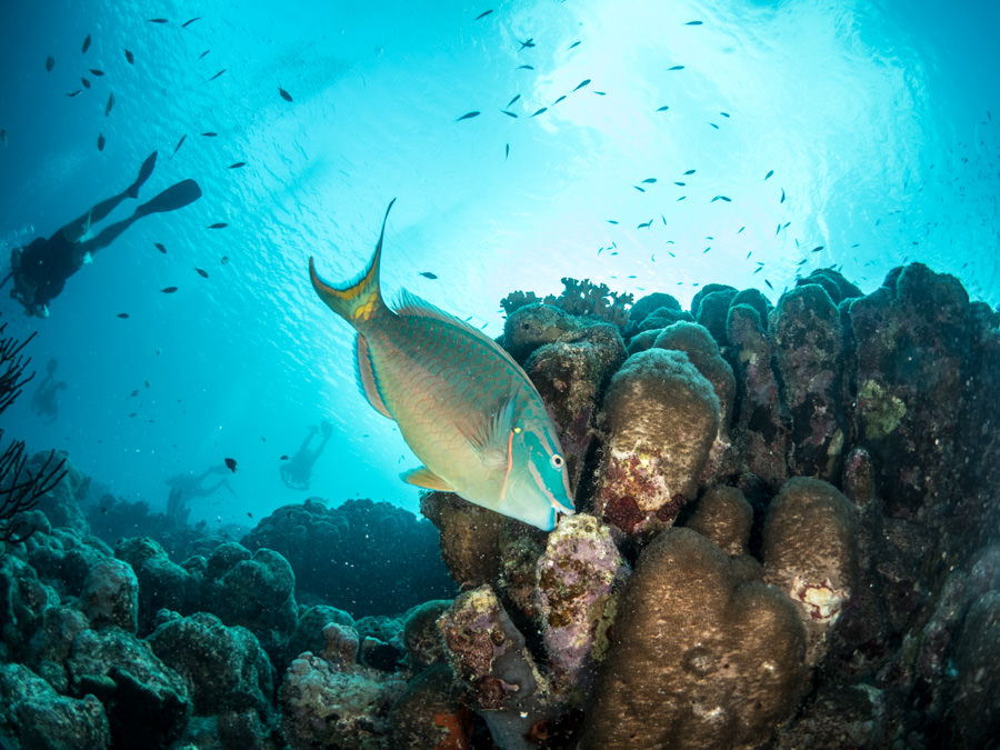 Bonaire underwater photography workshop