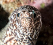 Diving in Bonaire - Moray Eel