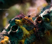 Underwater photo workshop Bonaire 2