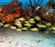 Diving in Cozumel pic 1
