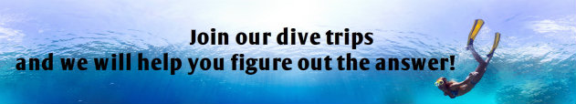 Join our dive trips