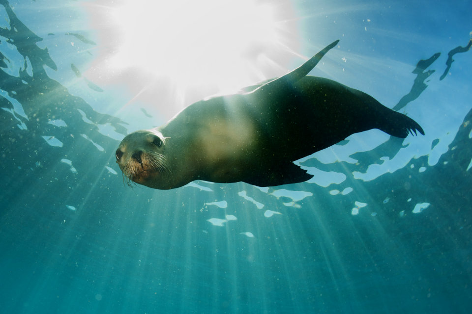 best dive sites in the Galapagos - Sea Lion