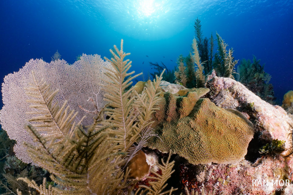 Coral reef Gardens Of The Queen
