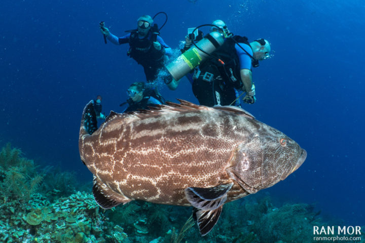 Divers and Grouper Gardens of the Queen