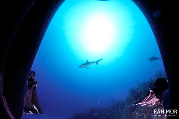 Caribbean Reef Shark - Gardens of the Queen
