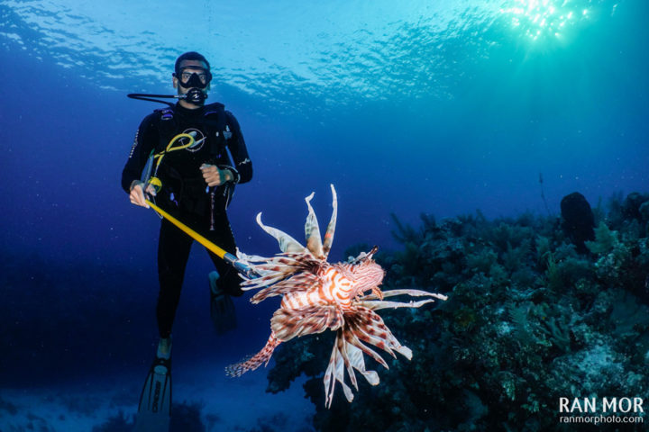 Hunting Lionfish - Gardens of the Queen, Cuba