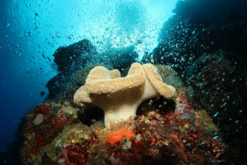Solomon Islands underwater photography 2