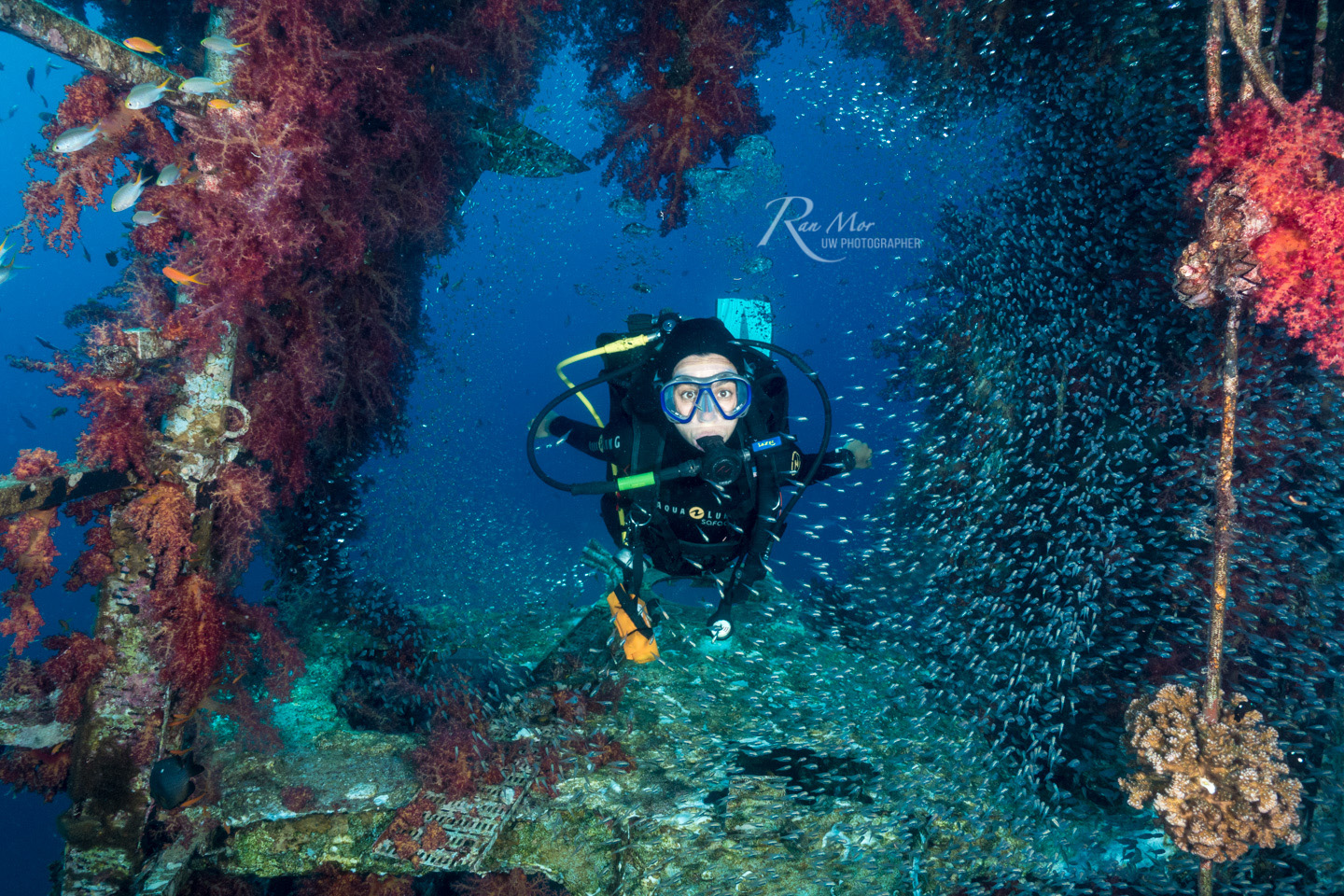 Scuba Girl with fish in wreck