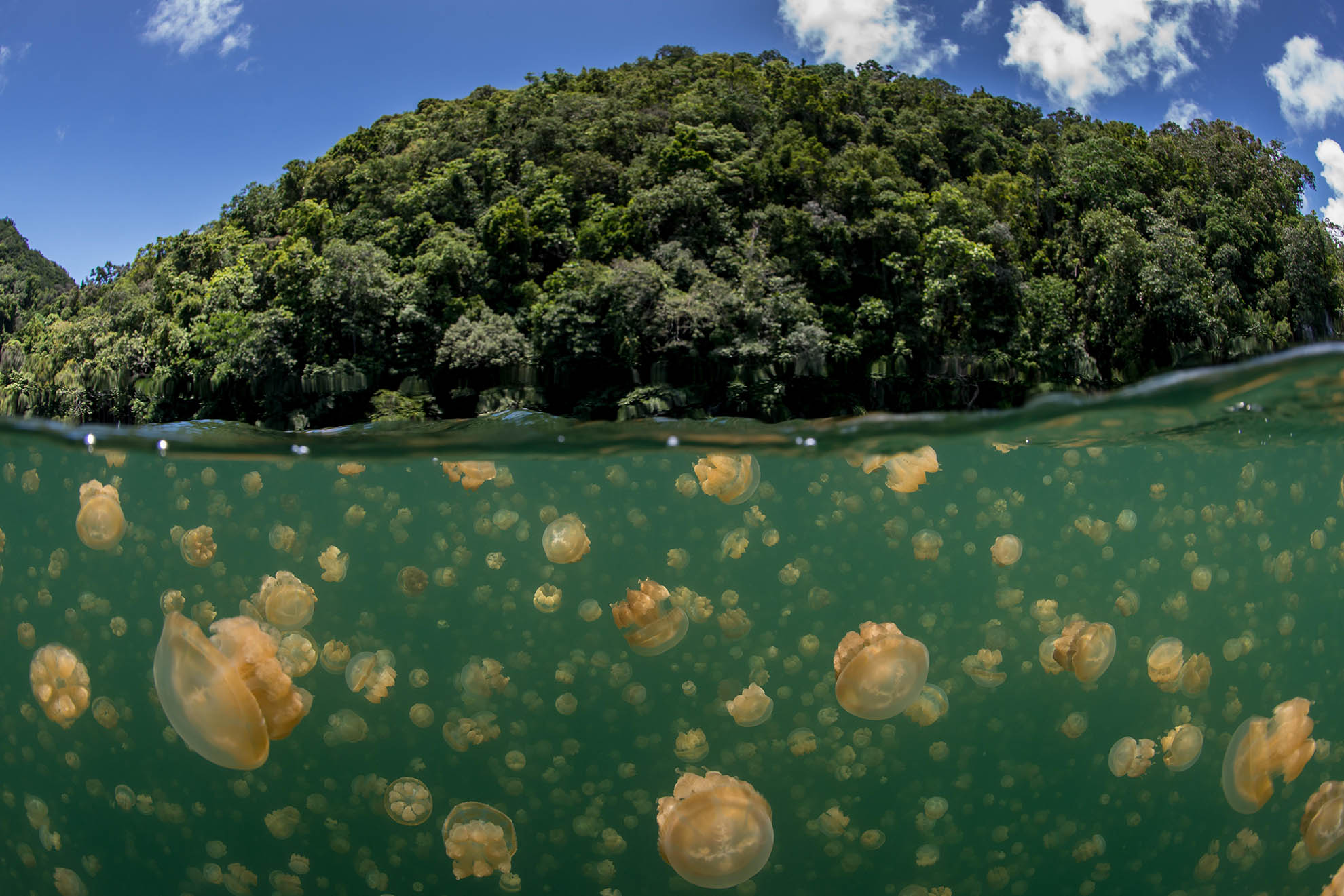 Jelly Fish Palau