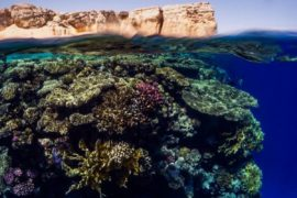 Red sea dive trip