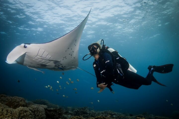 Manta ray and diver Raja Amapat