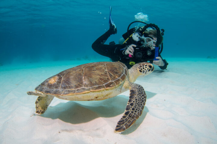 Sea Turtle and a diver